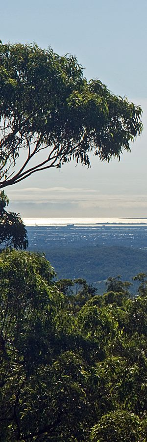 moreton bay view